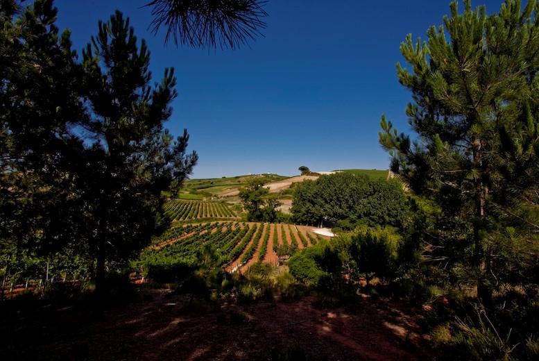 View from Quinta da Barreira