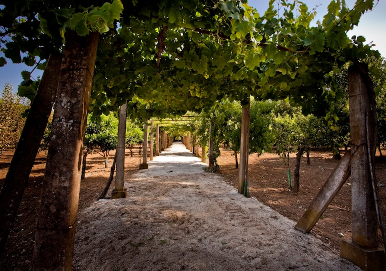 Quinta da Barreira vineyard