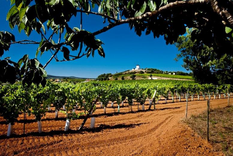 Quinta da Barreira vineyard
